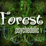 forest psychedelic sergipe 2017